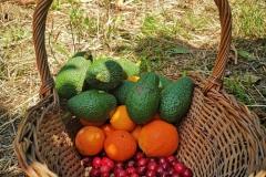Frutta di Etnalodge//Etnalodge 's fruits